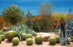 Cactuses composition; Stock Images
