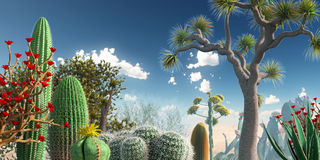 Cactuses. An early morning vista in the desert Royalty Free Stock Photo