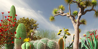 Cactuses. An early morning vista in the desert Stock Photography