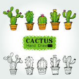 Cactuses in flower pot Vector illustration Royalty Free Stock Images