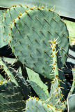 Cactuses in the garden. In summer stock images