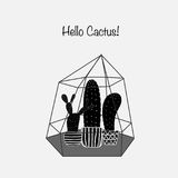 Cactuses In Glass Terrariums. Royalty Free Stock Image