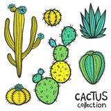 Cactuses Hand Drawn Abstract Natural Collection Royalty Free Stock Photography