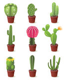 Cactuses icons Stock Photo