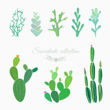 Cactuses and lichens  on white. Cactuses, ferns, moss and succulents  on white, vector floral elements Stock Image