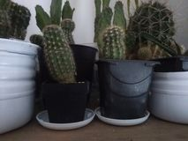 Cactuses, many, in pot. Many cactuses in their pots, big, small, different sizes stock images