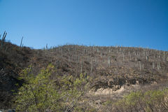 Cactuses in Mexico, Oaxaca. By the mountain road Stock Photo