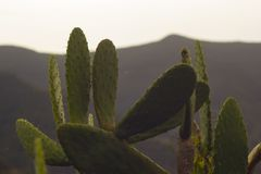 Cactuses in mountains. Tropical exotic cactuses in mountains Royalty Free Stock Photos