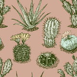 Cactuses pattern Royalty Free Stock Photography