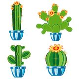 Cactuses in pot Royalty Free Stock Image