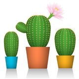 Cactuses in pots. Three plants in colorful packaging. White background. Vector illustrations Stock Images