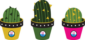 Cactuses Pots Royalty Free Stock Photo
