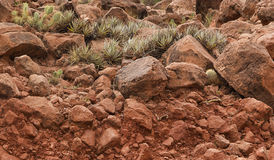 Cactuses on Red Rocks Royalty Free Stock Photography