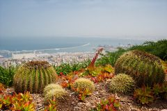Cactuses on the seaside Royalty Free Stock Image