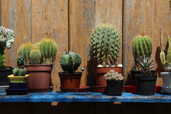 Cactuses on a Shelf in the Garden Stock Image