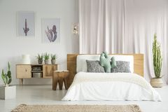 Cactuses in spacious bedroom. Cactuses everywhere in spacious bedroom with wooden furniture set stock image