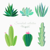 Cactuses and succulents collection Royalty Free Stock Image