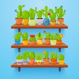 Cactuses and succulents in flower pots on shelves. Home cactus plants with prickles and flowers. Exotic tropical. Vector collection of various succulents Royalty Free Stock Photography