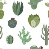 Cactuses and succulents vector seamless pattern. Cartoon thorny cactuses and succulents vector seamless background pattern Royalty Free Stock Photo