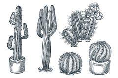 Cactuses and succulents vector sketch illustration. Desert nature plants, hand drawn print design elements set royalty free illustration