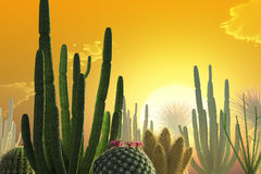 Cactuses. Sunset over a desert landscape with cactuses Stock Photography