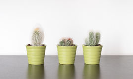 Cactuses. Three cactuses on a table royalty free stock images