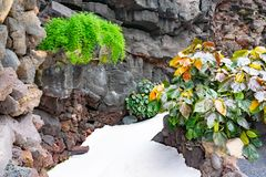 Cactuses and tropical plants in garden of the Jameos del Agua, Lanzarote, Canary Islands, Spain.  royalty free stock photo