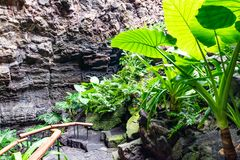 Cactuses and tropical plants in garden of the Jameos del Agua, Lanzarote, Canary Islands, Spain.  royalty free stock image