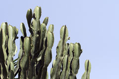 Cactuses Stock Photo