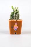 Cactuses on white background Royalty Free Stock Image