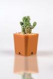 Cactuses on white background Stock Image
