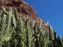 Cactusi Royalty Free Stock Photo