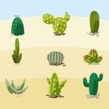 Cactusillustratie Stock Afbeeldingen