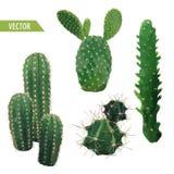 Cactusinstallatie Exotische Tropische de Zomer Botanische Achtergrond Stock Foto