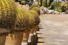 Cactusinstallatie in terracottapot stock fotografie