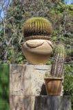 Cactusinstallatie in terracottapot royalty-vrije stock afbeelding