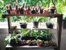 Cactusinstallaties stock afbeelding