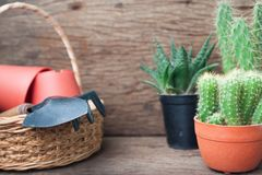 Cactusinstallaties en tuinhulpmiddelen in mand op houten achtergrond Stock Afbeeldingen
