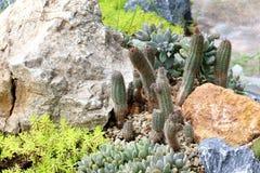 Cactusinstallaties op tuinachtergrond Royalty-vrije Stock Foto