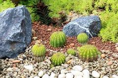 Cactusinstallaties op tuinachtergrond Royalty-vrije Stock Foto's