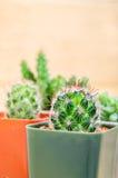 Cactusinstallaties in pot stock afbeelding