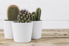 Cactusinstallaties in potten royalty-vrije stock fotografie