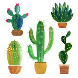 Cactusinzameling Royalty-vrije Stock Foto