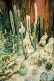 Cactusinzameling met diverse vorm lange klein en vat of rond gemaakt met aar of doorn - fotobogor royalty-vrije stock fotografie