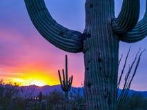 Cactuslandschap royalty-vrije stock afbeeldingen