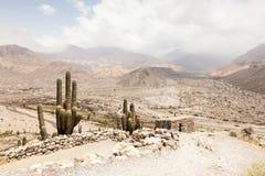 Cactuslandschap Stock Foto