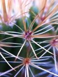 Cactusmacro stock afbeeldingen