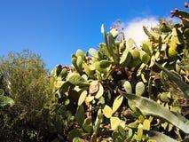 Cactusmanie royalty-vrije stock afbeeldingen