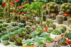 Cactusmarkt Royalty-vrije Stock Foto