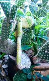 Cactusoverlevenden Royalty-vrije Stock Foto